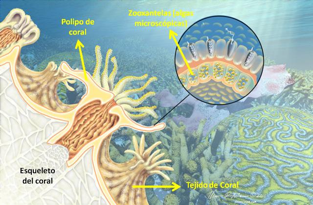 Cambio Climático en Arrecifes de Coral | Blogs El Tiempo