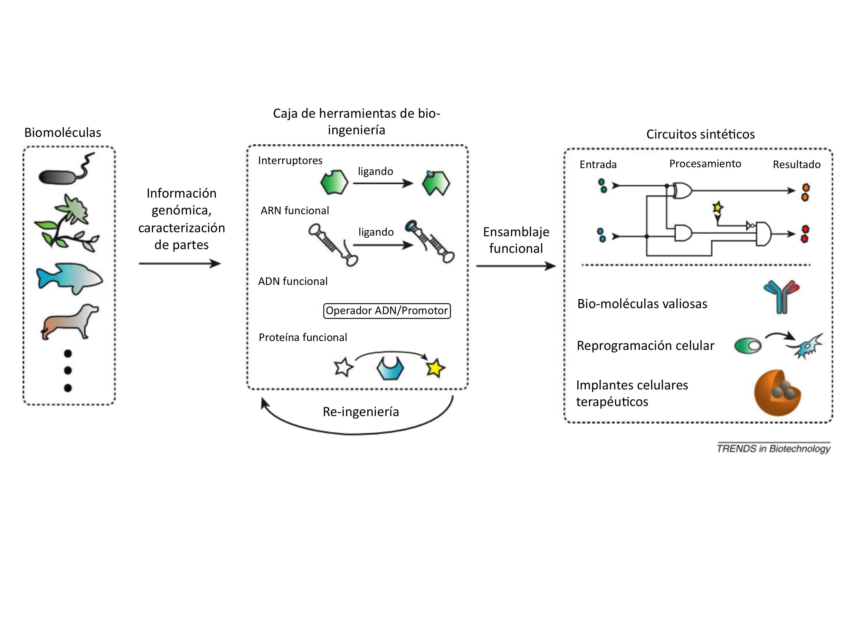 Figura 1 los principios de la biologia sintetica moleculas