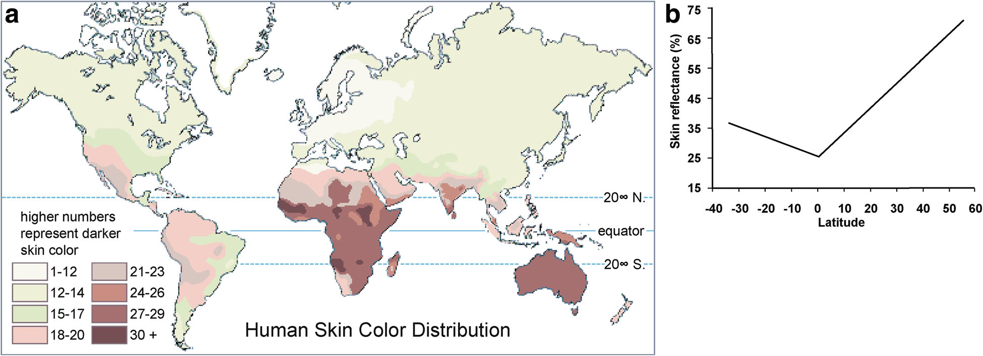 Fig 3Adaptation of human skin color in various populations