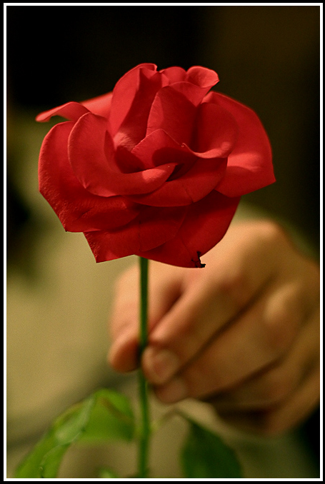 Por Qué Un Hombre Regala Una Rosa Blogs El Tiempo