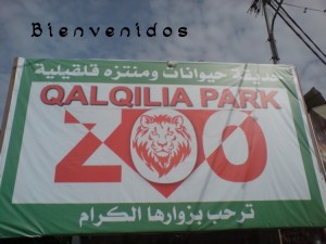 Qalqilya zoo copy