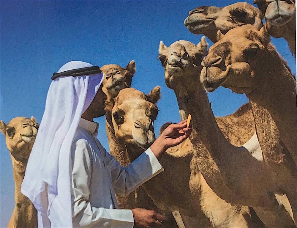 Camell peanuts