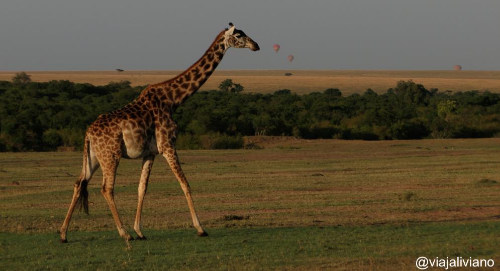 Algunos globos en el horizonte - safari en Kenia