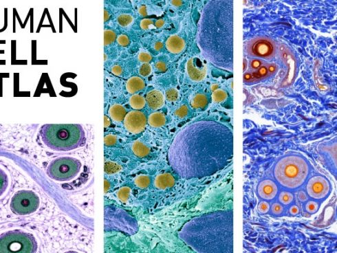 Tomado de: Broad Institute, Research highlights: Human Cell Atlas. https://www.broadinstitute.org/research-highlights-human-cell-atlas