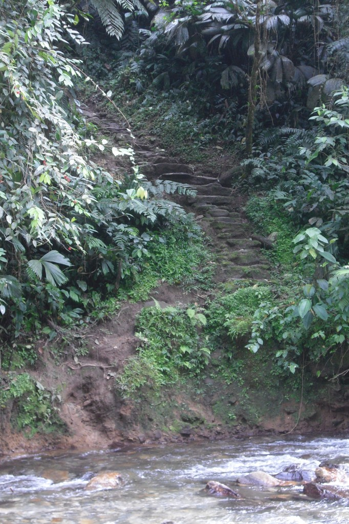The steps to Colombia's La Ciudad Perdida, The Lost City.