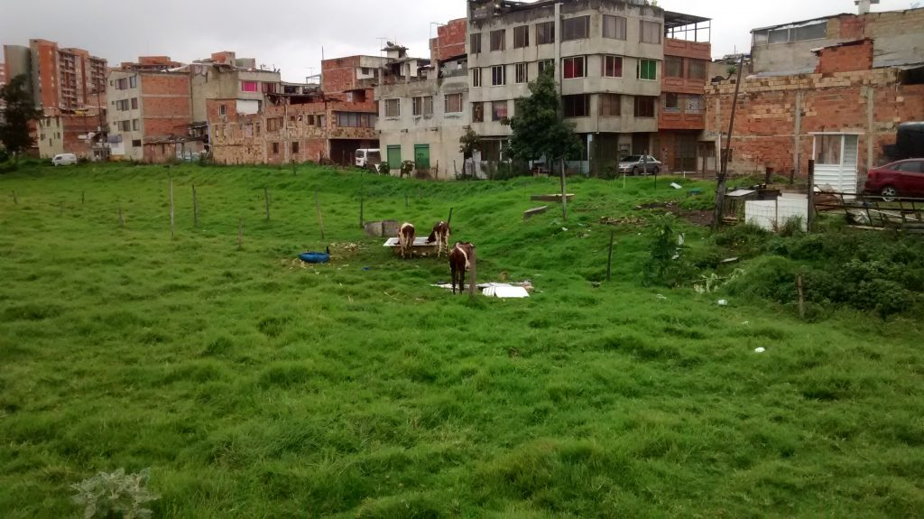 Some city grazers in Barrio Santandercito in the north of Bogotá, Colombia.